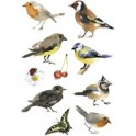 "HERMA sticker DECOR ""oiseaux aquarelle"""