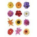 "HERMA sticker DECOR ""fleurs de montagne"""