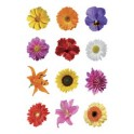 "HERMA sticker DECOR ""fleurs"""